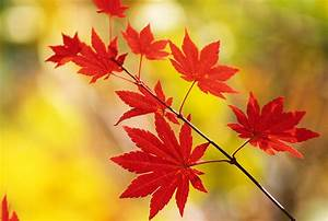 Beautiful, Nature, Pictures, Beautiful, Crimson, Autumn, Leaves