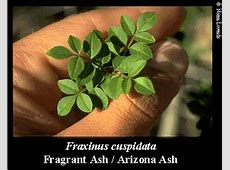 NMSU Low WaterUse Landscape Plants for the Southwest