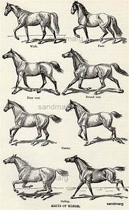 Gait Chart Of A Horse