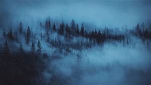 Pine, Trees, Fog, Forest, Hd, Dark, Aesthetic, Wallpapers