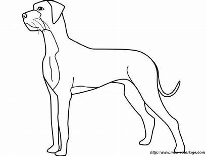Dane Coloring Dog Tattoo Dogge Deutsche Danois