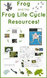 112 Best Pond Teaching Unit Images On Pinterest