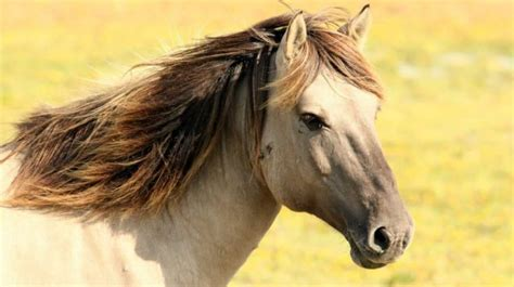 horse breeds beginner riders
