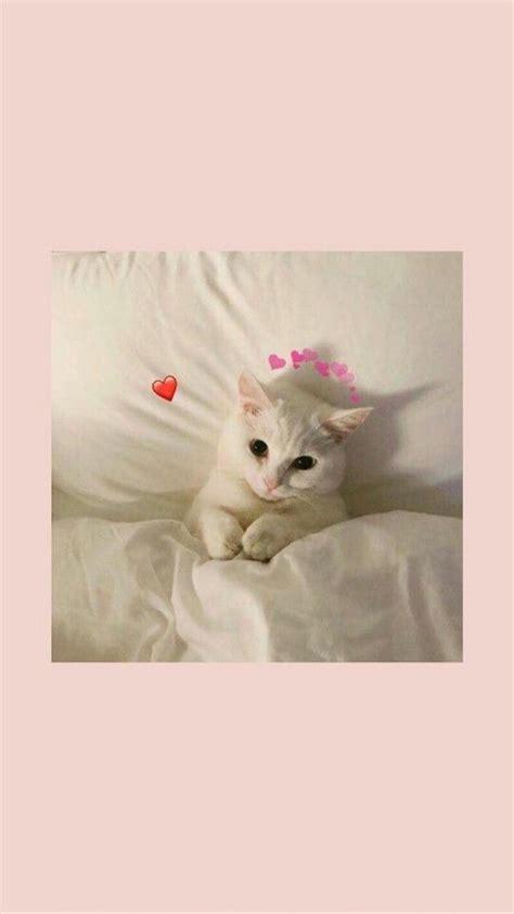 trend seni kucing gambar hewan gambar hewan lucu