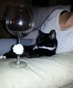 cat wine cat wine happy stuff cats cat