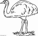 Emu Coloring Ausmalbilder Strauss Printable Easy Spinne Preschool Vector Cartoon Coloringall Any sketch template