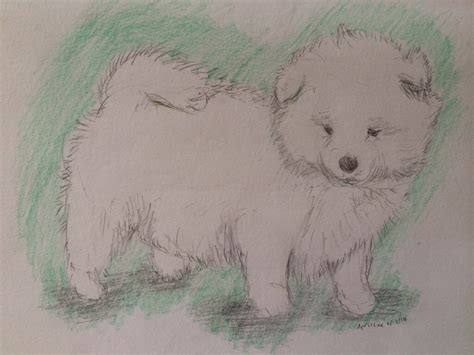 How To Sketch A Cute Samoyed Puppy Drawing Animals