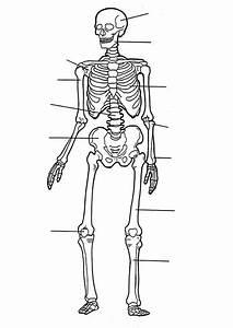 coloring page Human body - Human body | Homeschooling ...