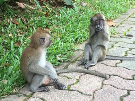 Two Monkeys At The Reservoir