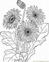 Coloring Daisy Flowers Printable Coloringpages101 Pdf sketch template