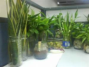 Beautiful Indoor Plant Decoration Ideas For Hall Kitchen
