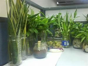 Plant Ideas Indoor Plants Decoration Interior Design ...