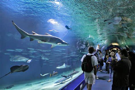 vancouver aquarium part of avanqua selected to manage oceanografic aquablog