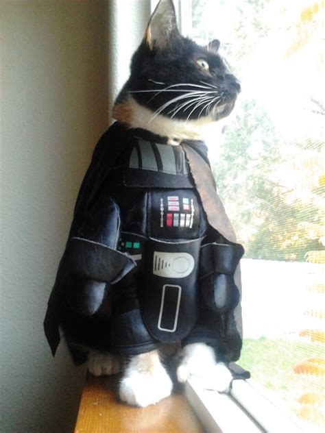 Katze Darth Vader by Cats Animalcosplay