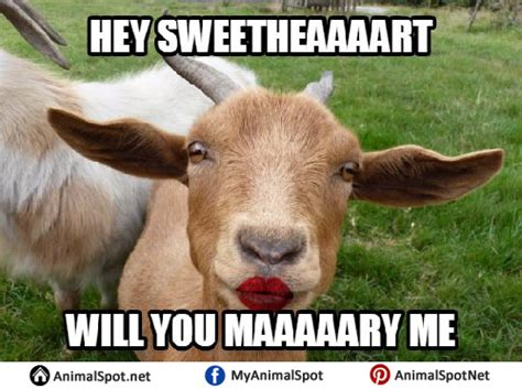 Billy Goat Meme - billy goat meme 100 images ridiculously photogenic goat generated from r funny imgflip 554