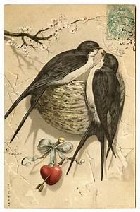 Antique, Graphic, -, Pretty, Bird, Pair, With, Nest