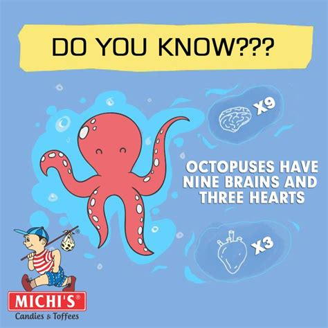 19 best facts images on facts 593 | c0670bcef8f01867122ea2cb304e41b0 octopus facts the octopus