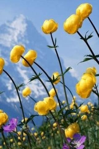 Animated Mobile Phone Wallpapers Flowers - mobile animated flower wallpapers