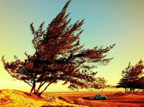 Novembra sākumā gaidāms galvenokārt sauss, bet vietām ...