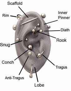 Lobe Ear Piercing Diagram by Piercing Shiva Piercings