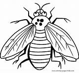 Coloring Pages Fly Bugs Printable Bug Sheet Sheets Animal Flies Insects Animals Printables Print Cartoon Guy Getcoloringpages Letscolorit sketch template
