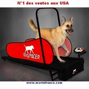 tapis roulant dog pacer home trainer pour chien With tapis de course pour chien