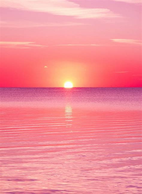 Summer Aesthetic Phone Wallpapers by 1544 Pink Sunset The Backdrop Co Products