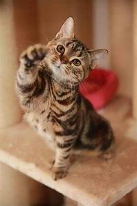 How, Cats, Show, Love, To, Their, Owners, One, Friendly, Way, Cats, Greet, Those, They, Tru