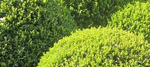 Ab Wann Vertikutiert Man Den Rasen : hitze im garten das r t der pflanzenexperte gr gott ~ Buech-reservation.com Haus und Dekorationen