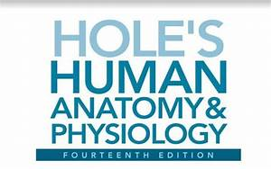 Hole U0026 39 S Human Anatomy And Physiology 14th Edition Pdf
