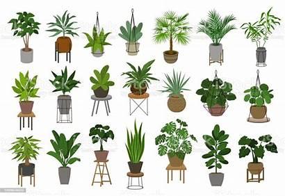 Plant Plants Indoor Vector Garden Pots Air