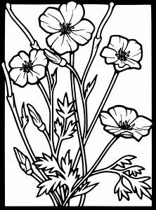 Poppy Clip Art at Clker.com - vector clip art online ...