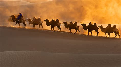 Silk Road Think Tank calls for joint cooperation to tackle ...
