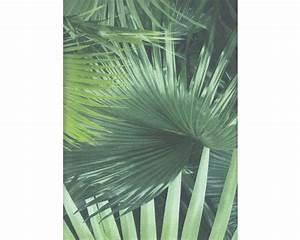 Palmen Kaufen Baumarkt : vliestapete 524901 crispy paper planet home palmenbl tter gr n bei hornbach kaufen ~ Orissabook.com Haus und Dekorationen