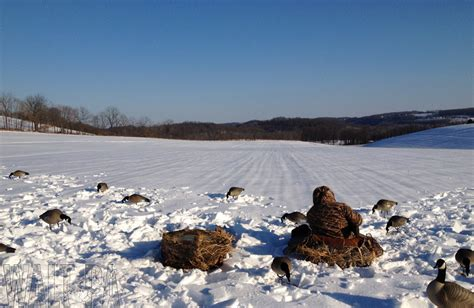 best 28 pennsylvania dove season canada goose hunting