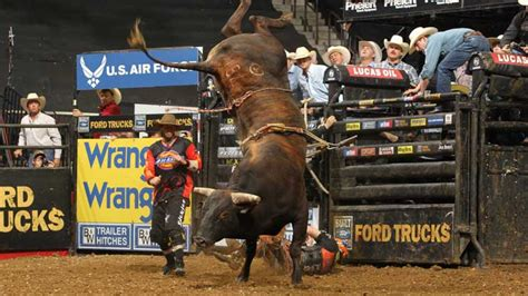 outdated bull riding event unethical  inhumane rspca