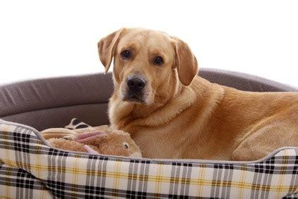 orthopaedische hundebetten fuer alte kranke hunde
