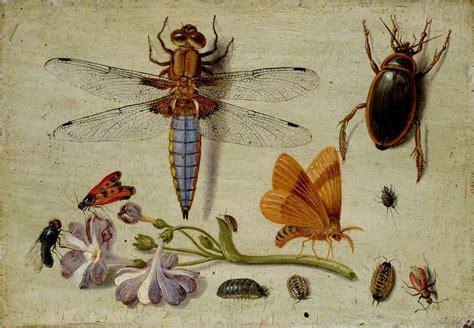 filejan van kessel  cockchafer beetle woodlice