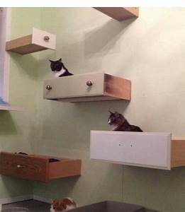 how to build cat shelves design decoration With what kind of paint to use on kitchen cabinets for wine cork holder wall art
