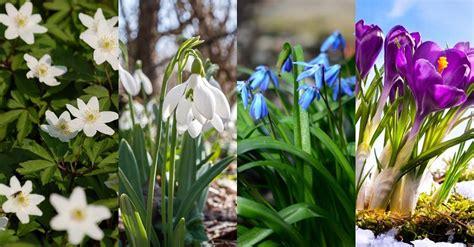 20 pavasara puķes tavā piemājas dobē - Tava Klade