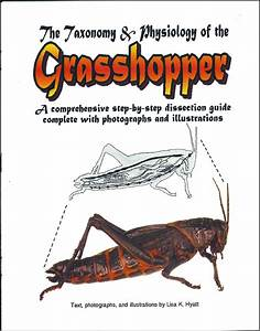 Grasshopper Dissection Reference Guide