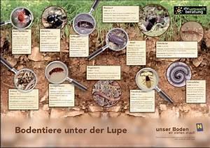 Tiere Unter Der Erde : unser boden service portal ~ Frokenaadalensverden.com Haus und Dekorationen