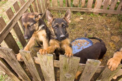 chien vente le site des animaux