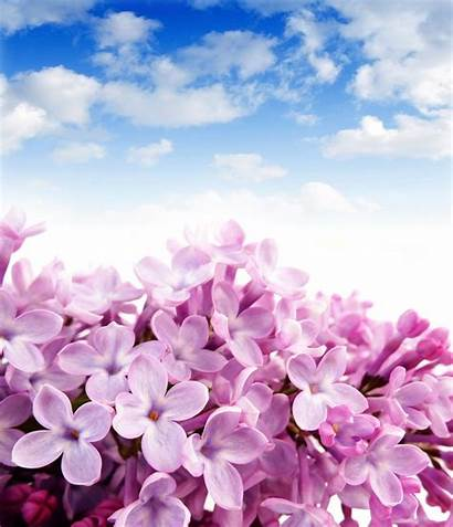 Lilac Flowers Sky Wallpapers Brilliant Flower Wall
