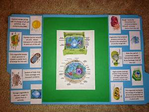 Making A Lapbook For Plant And Animal Cells