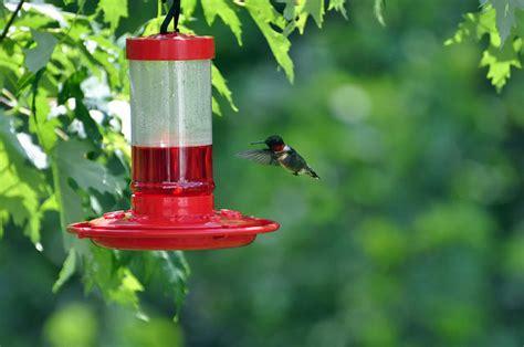attracting birds   feeder audubon  york
