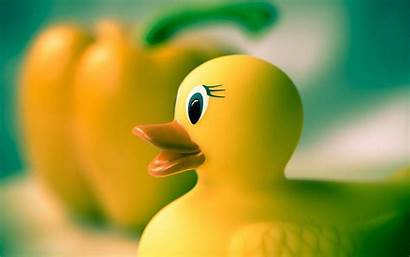 Duck Rubber Yellow Toy Wallpapers Toys Ducky