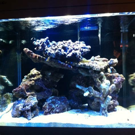 sea max 130 up of live rock aquarium sea up and