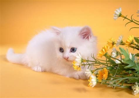 Beautiful Cat Wallpapers Hd Pictures  One Hd Wallpaper