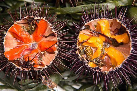 oursin cuisine oursins une franco japonaise